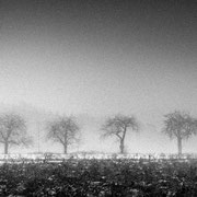 """Title: """"Row of trees 03, b&w"""", december 2019 (printed on """"bamboo"""")"""