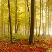 "Misty forest 01, october 2012 (printed on ""fine art baryta"")"