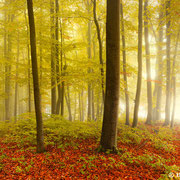 "Title: ""Misty forest 01"", october 2012 (printed on ""fine art baryta"")"