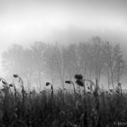 """Summer has gone 05, b&w, december 2015 (printed on """"bamboo"""")"""