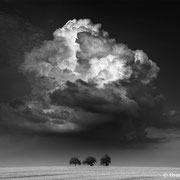"Title: ""3 trees, sometimes bigger is better 01, b&w"", 2013 (printed on ""fine art baryta"")"