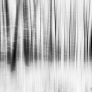 "Title: ""Fresh snow 02, b&w"", january 2016 (printed on ""bamboo"")"