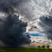 """3 trees, blue sky 01, 2014 (printed on """"fine art baryta"""")"""