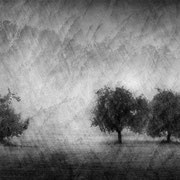 """Title: """"Lost in tranquility 01, b&w"""", september 2016, composite image 2020 (printed on """"bamboo"""")"""
