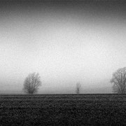 """Title: """"Row of trees 07, b&w"""", 2020 (printed on """"bamboo"""")"""