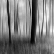 """Title: """"Light and shadow 05, b&w"""", october 2016 (printed on """"bamboo"""")"""