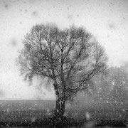 """Title: """"The first snowfall 01, b&w"""", january 2015 (printed on """"bamboo"""")"""