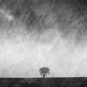 """Title: """"Lost in tranquility 04, b&w"""", january 2016, composite image 2018 (printed on """"bamboo"""")"""