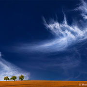 """3 trees, up in the air 05.3, 2014 (printed on """"fine art baryta"""")"""