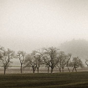 """Title: """"Row of trees 02"""", november 2015 (printed on """"bamboo"""")"""