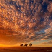 """Title: """"3 trees, orange sunset glow 01"""", 2013 (printed on """"fine art baryta"""")"""