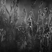 """Light show 01, b&w, june 2014 (printed on """"bamboo"""")"""