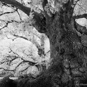 """Title: """"Standing strong 02, b&w"""", october 2012 (printed on """"bamboo"""")"""