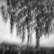 "Title: ""Impressionist tree 01, b&w"", 2020 (printed on ""bamboo"")"