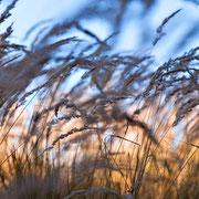 """Grasses 01, september 2013 (printed on """"bamboo"""")"""