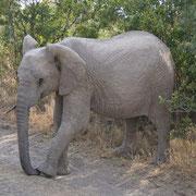 Ranger sorgen für das Wohl der Elephanten und der Biker