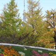 空襲犠牲者を追悼し平和を祈念する碑と東京スカイツリー