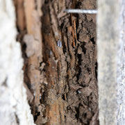 ④中の木枠(構造材)がやられています。