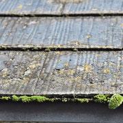 ④付着物が苔の養土化する軒先。