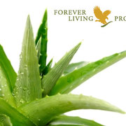 Aloe Vera für Tiere