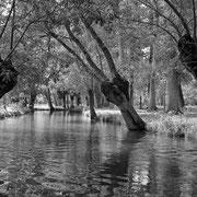 Marais de Poitevin