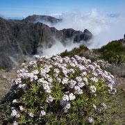 Pico da Avieiro