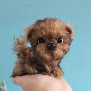 "Hund ""Frea""(verkauft)"
