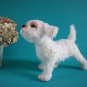 "Hund ""Adina""(verkauft)"