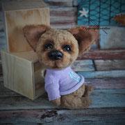"""Chihuahua """"Joschi""""(verkauft)"""