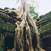 Typisches Bild in den Ruinen von Angkor.