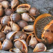 Der Tonle Sap ist eine wichtige Lebensader für die Kambodschaner und ein Lieferant von Fischen und Meeresfrüchten.