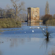 Ruin-2 De Nijenbeek