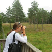 Auf Elch-Safari