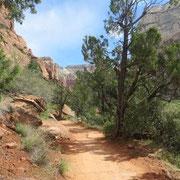 Auf dem Grotto Trail im Zion Nationalpark