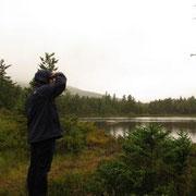White Mountain National Forest - auf der Suche nach Moose