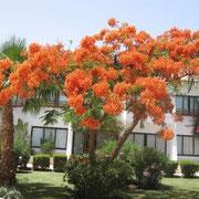 Grand Hotel - eine grüne Oase