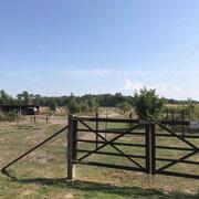 Sommer 2019 - im vorderen Bereich sieht man den Paddock und einen Teil des Trails - die Weiden liegen im hinteren Bereich