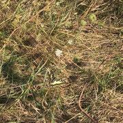 Schwalbenschwanz - ein besonders schöner und relativ großer Schmetterling