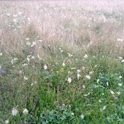 Artenreichtum auf unseren Weiden