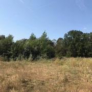 Hinter der Baumreihe versteckt sich die Weideschutzhütte