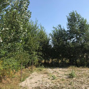 """Um die Weideschutzhütte herum ist ein kleiner neuer """"Waldbereich"""" entstanden - hier liegt auch ein Teil mit Erbsenkies"""