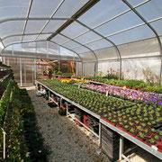 Überdachte Freifläche für Freilandpflanzen und Stauden