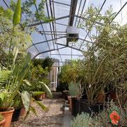 Unser Überwinterungshaus für Kübelpflanzen