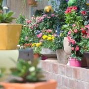 Bunte Vielfalt an Kübelpflanzen und Sommerblumen