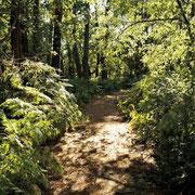 Sentier de Sanguinet