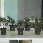 Le piante da lavorare