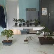 Panoramica delle piante