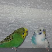 Maxi und Nessi