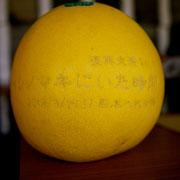 八代の名産品 晩白柚に舞台のお知らせを刻印してくれてました