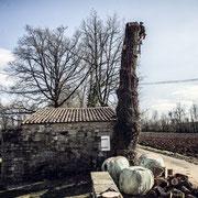 ©Diane Barbier Abattage d'arbre dangereux
